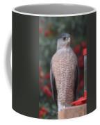 Coopers Hawk I Coffee Mug