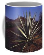 Mexico, Oaxaca, Field Of Agave Plants Coffee Mug