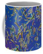 Microscopic View Of Diatoms Coffee Mug by Darlyne A. Murawski
