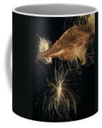 Milkweed Pod Coffee Mug