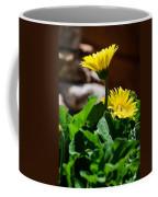 Miniature Yellow Gerbera Daisies Coffee Mug