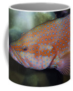 Miniatus Grouper - Cephalopholis Miniata Coffee Mug