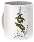 Mint Plant, 1735 Coffee Mug