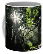 Misty Morning At The Circle B Bar Reserve  Coffee Mug