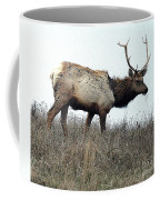 Molting Tomales Bay Elk Coffee Mug