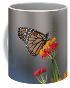 Monarch Butterfly On Milkweed Coffee Mug