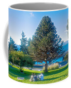 Monkey Puzzle Tree In Central Park In Bariloche-argentina  Coffee Mug