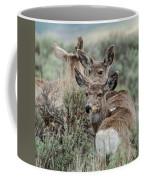 Montana Mule Deer On A Spring Night Coffee Mug