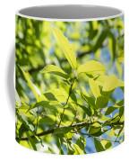 Monterrey Oak Leaves In Spring Coffee Mug