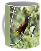 Montezuma Oropendula Coffee Mug