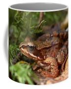 Moor Frog In September  Coffee Mug
