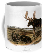 Moose Deer (cervus Alces) Coffee Mug by Granger