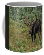 Moose In Shrubs Coffee Mug