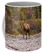 Moose Pawses In Mid-drink Coffee Mug