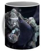 Moray Eel Eating Little Fish Coffee Mug
