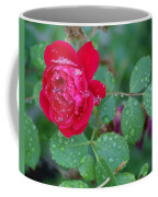 Morning Dew On A Rose Coffee Mug