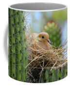 Mourning Dove Nest In A Cactus Coffee Mug