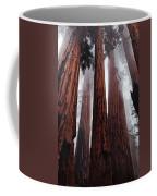 Morning Fog In Redwood Forest Coffee Mug