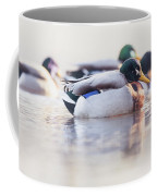 Morning Swim Coffee Mug