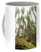 Moss Under The Cedars Coffee Mug