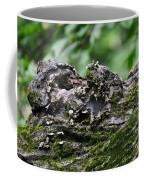 Mossy Tree Knot Coffee Mug