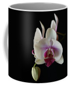 Moth Orchid 2 Coffee Mug