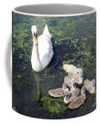Mother Swan And Baby Cygnets Coffee Mug