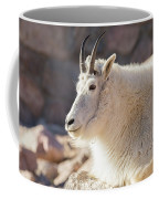 Mountain Goat Billy Basks In The Morning Sun Coffee Mug