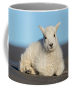 Mountain Goat Kid Relaxes In The Road Coffee Mug