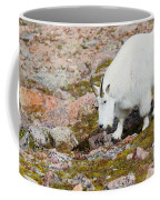 Mountain Goats On Mount Bierstadt In The Arapahoe National Fores Coffee Mug