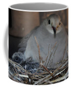 Mourning Dove With One Of Two Chicks Coffee Mug