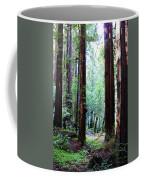 Muir Woods 1 Coffee Mug
