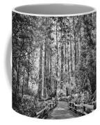 Muir Woods Bw Coffee Mug