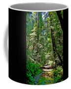 Muir Woods Study 22 Coffee Mug