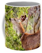 Mule Deer Foraging On Pine On A Colorado Spring Afternoon Coffee Mug