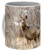 Mule Deer In Winter In The Pike National Forest Coffee Mug