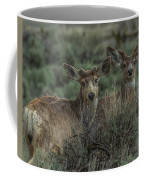 Mule Deer Visitors At Sunset Coffee Mug