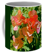 Multi-colored Bougainvillea At Pilgrim Place In Claremont-california  Coffee Mug