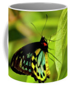 Multi Colored Buttrfly Coffee Mug
