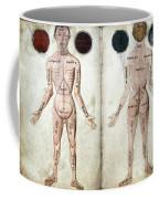 Muscle Man, Brains Ventricles, 15th Coffee Mug