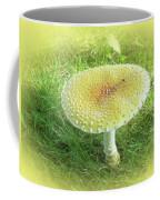 Mushroom - Amanita Muscaria Guessowii  Coffee Mug