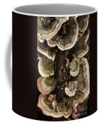Mushroom Shells By The Lake Shore Coffee Mug