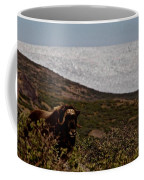 Musk Ox In Front Of Greenlandic Icecap Coffee Mug