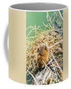 Muskrat Sun Bathing Coffee Mug