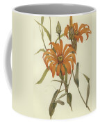 Mutisia Decurrens Coffee Mug