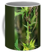 Mutualism - Ants And Treehoppers Coffee Mug