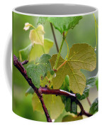 My Grapvine Coffee Mug by Robert Meanor