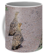 Namaqua Sandgrouse Coffee Mug