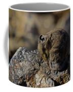 Napping American Pika - 4694 Coffee Mug