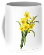 Narcissus (n. Tazetta) Coffee Mug